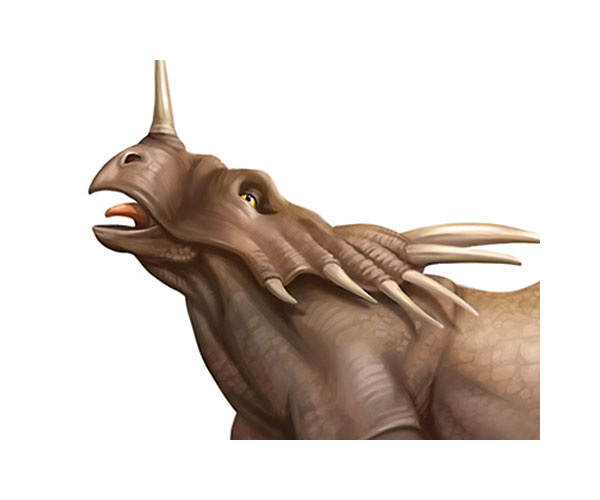 styracosaurus-triceratops-illustration